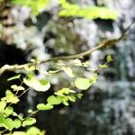 日本の滝百選 – 新緑の季節に龍双ヶ滝へ!