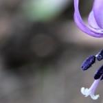 矢ばなの里 – カタクリの花の群生地